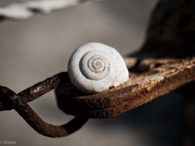 escargot1